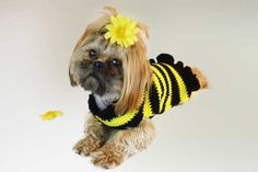 Bumble Bee Dog Sweater Free Crochet Pattern Bees are so important for life here on this green planet. Here are 26 free Beautiful Crochet Bee Patterns that are perfect for spring and summer. Crochet Dog Clothes, Crochet Dog Sweater, Dog Sweater Pattern, Dog Pattern, Pet Clothes, Free Pattern, Sweater Patterns, Crochet Sweaters, Dog Clothing