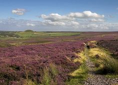 Heather moorland in the North York Moors in North Yorkshire, England. Looking for Heathcliff Yorkshire England, North Yorkshire, Oh The Places You'll Go, Places To Visit, American Werewolf In London, Wuthering Heights, Dartmoor, Tourist Information, Beautiful Landscapes