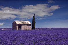 Ancient remains of the Calanques, fields of lavender perched villages, Provencal wonders await your visit. Here, the Sault , in the department of Vaucluse, which offers beautiful shades of blue.