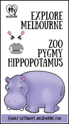 View the cute baby Pygmy Hippopotamus together with over 300 species of wildlife at the Melbourne Zoo, a fun day out for the while family Animal Species, Endangered Species, Rare Animals, Strange Animals, Melbourne Attractions, Melbourne Zoo, Mammals, Primates, Wolf Pup
