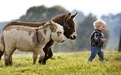 I WANT just because... 2 miniature donkeys and 1 miniature cowboy!