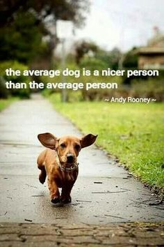 the average dog is a nicer person than the average person. -andy rooney   True! : )