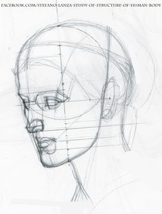 https://www.facebook.com/Stefano-Lanza-Study-of-structure-of-human-body-1479159998770051/ #anatomy #head #draw #drawing #pencil