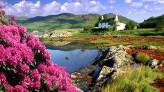 The highlands of Scotland. Spring Wallpaper, Nature Wallpaper, Landscape Wallpaper, Wallpaper Desktop, Desktop Wallpapers, Screen Wallpaper, Beautiful Wallpaper, Flower Wallpaper, Scotland Wallpaper