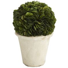 Preserved Boxwood Topiary - Short