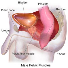 Kapszulák prosztatitis Prostatitis patogenezis