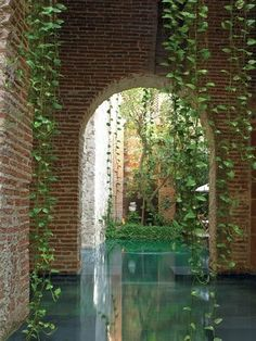 Plants***Pothos vines enliven brick walls of original aljibe, or rainwater reservoir. reflecting pool by Alberto Burckhardt