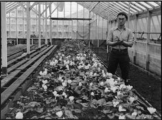 WWII - Greenhouse on nursery operated, before evacuation, by horticultural experts of Japanese ancestry in San Leandro, California.- They were NEVER reimbursed for much of what they lost or was simply taken away.