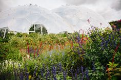 What to see and do in September at the Eden Project, Cornwall