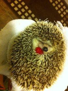 A Hedgehog Cuddling With a Raspberry :)
