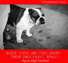 Dog Quotes: Sad Quotes, Loss, Grief