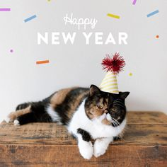 Free Happy New Year 2019 animated gifs - best New Year wishes and greetings animation collection. Happy New Year Love, Happy New Year Wishes, Happy New Year Greetings, New Year Greeting Cards, Christmas And New Year, Christmas Fun, New Year Animated Gif, Happy New Year Animation, New Year Pictures