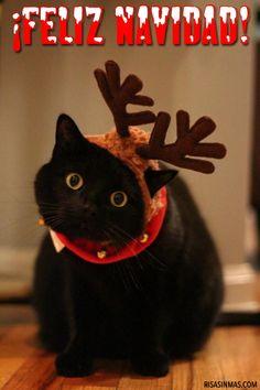 Postal de Navidad: Gato.