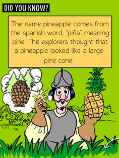 Fun food facts! Where did the pineapple get its name?