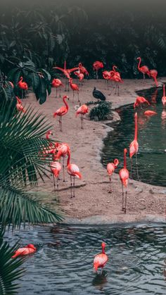 How to Visit Flamingo Beach - Tier Wallpaper, Flamingo Wallpaper, Summer Wallpaper, Iphone Background Wallpaper, Animal Wallpaper, Nature Wallpaper, Beautiful Birds, Animals Beautiful, Cute Animals