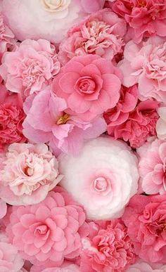 Beautiful Flowers Pink