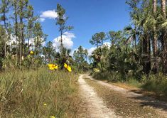 Hike into the Everglades right from Alligator Alley