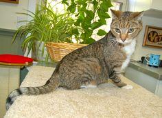 Oliver posing for Cat Vogue!