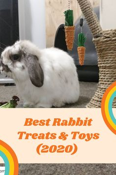 House Rabbit, Pet Rabbit, Bunny Supplies, Rabbit Treats, Small Kittens, Bunny Care, Guide Dog, Boredom Busters, Budgies