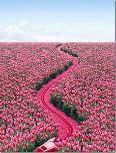 Amazing pink road