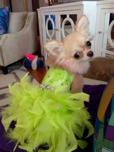 Lime Green Neon Lace Feather Harness Dog Dress with Crystals