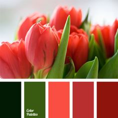 Warm shades of red will be in harmony with warm hues of green, provided that there will be more red than green.