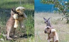 Happy Pictures, Cute Pictures, Meanwhile In Australia, Animal Rescue Center, Best Pal, Sweet Stories, Wholesome Memes, Animal Rescue Shelters, Funny Cute