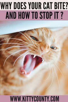 Has your cat suddenly started biting? What to do when your cat starts biting and how to make her stop biting you? In this article, let's understand why do cats bite and what to do so that they drop their habit of biting you. #catbites #catownertips #catcare #kittycounty #catbehavior