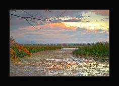 View through the reeds on Lake Wendouree, Ballarat, Australia