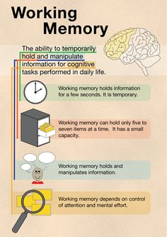 People with ADHD can have a weakness with working memory. Learn more about working memory here. Learning Tips, Brain Based Learning, Educational Psychology, School Psychology, Memory Psychology, Cognitive Psychology, Speech Language Pathology, Speech And Language, Psychologie Cognitive
