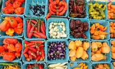 Eckerton Hill Farm of Fleetwood, PA grows over 60_ varieties of chile peppers on a 100 acre farm.