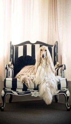 Big Dogs, Cute Dogs, Dogs And Puppies, Doggies, Doggie Beds, Beautiful Dogs, Animals Beautiful, Hound Dog Breeds, Love My Dog
