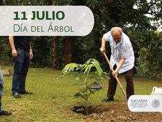 Día del árbol. SAGARPA SAGARPAMX