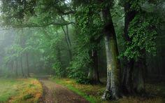 Odenwald (Germany)