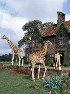 Giraffe Manor in Nairobi, Kenya