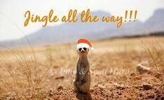 Namibia Safari and Lodges - Gondwana Collection Jingle All The Way, Self Driving, Round Trip, Lodges, Safari, Tours, Memes, Image, Cabins