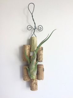 Tillandsia Medusa Caput on Wine Cork Plaque by CraftOrganic