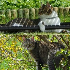 Enjoying some time with mummy in the garden  #cats #catsofinstagram #neko #cat #nekos #nekostagram #catlife #catlover #catstagram #catsagramcats #cats_of_instagram #catoftheday #crazyaboutcats #instacats #ilovecats #meow #catscircus #fluffy_n_adorable # #bestmeow #meowbox #weeklyfluff #instakitty #kittensofinstagram #instapet #caturday @meowbox #topmeow_beauties #meow_beauties #cutecats #beautifulcat by lilly2012_filou2004