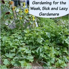 Here are 7 practical things to make gardening for the weak, sick and lazy gardeners more enjoyable and successful. Proven gardening methods anyone can do.