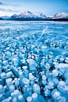 Frozen lake bubbles, Alberta, Canada