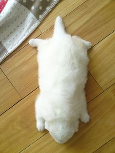 puppy slug