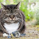 Cat Injury Treatments - HowStuffWorks