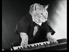 ▶ KEYBOARD CAT-new commercial in England! -