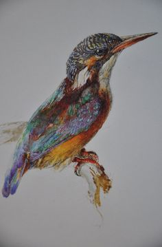 """John Ruskin """"Study of a Kingfisher"""" - on loan from the Ashmolean Museum, University of Oxford to the National Galleries of Scotland"""