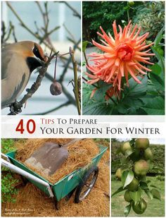 Expert and experienced gardeners share 40 tips to prepare your garden for winter (and make it better in spring) at empressofdirt.net