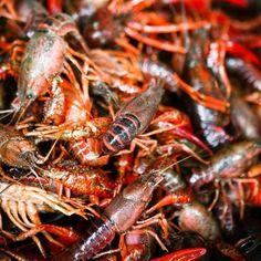 Jak i jak długo gotować raki Shrimp, Seafood, Meat, Sea Food, Beef