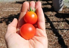 Camp Joy  - The Nitty Gritty Potager
