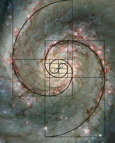 Plant growth is governed by the Fibonacci sequence, which can be understood as a… by MyohoDane