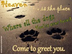 Heaven is the place where all the dogs you've ever loved come to greet you