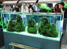 Such a beautiful scape ------------------------------------------------ #aquascape #aquarium #aqua #aquascaping #wood #grass #tetra #fish #fishtank #tropical #tropicalfish #iwagumi #scenery #water #fresh #aquariumsofinstagram #aquaria #beautiful #awesome #plants #aquariums #instafish #naturalaquariums #beautiful #aquariumsdaily #design #ADA